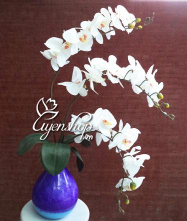 binh hoa lan - hoa lua - uyenshop