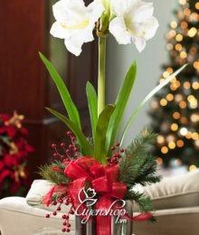 hoa gia - hoa hue lan - uyenshop