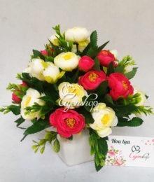 Hoa trà trắng đỏ
