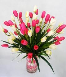 Hoa tulip trắng hồng